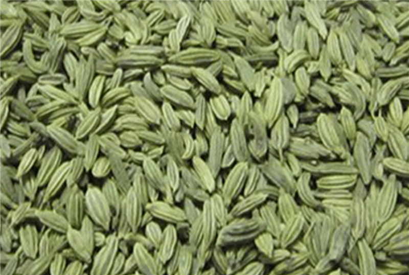 Fennel Seeds For Green five best natural cures bloating stomach for gas Five Best Natural Cures Bloating Stomach for Gas Fennel Seeds